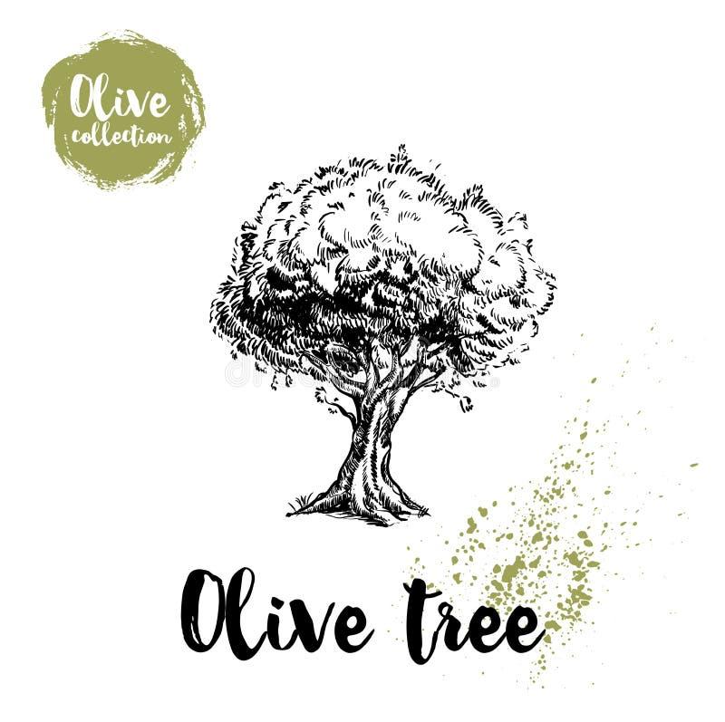 Affiche tirée par la main d'olivier Vieille illustration de regard de vecteur Grand pour le cosmétique écrème des conceptions, la illustration de vecteur