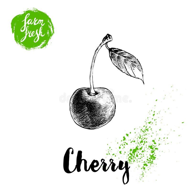 Affiche tirée par la main de cerise de style de croquis Baie fraîche de ferme simple avec la feuille Vecteur de fruits de nourrit illustration de vecteur