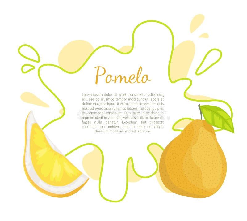 Affiche tropicale de nourriture de vecteur exotique de fruit de pamplemousse illustration de vecteur