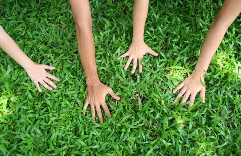 Download Affichez-moi vos mains ! photo stock. Image du tige, people - 730734