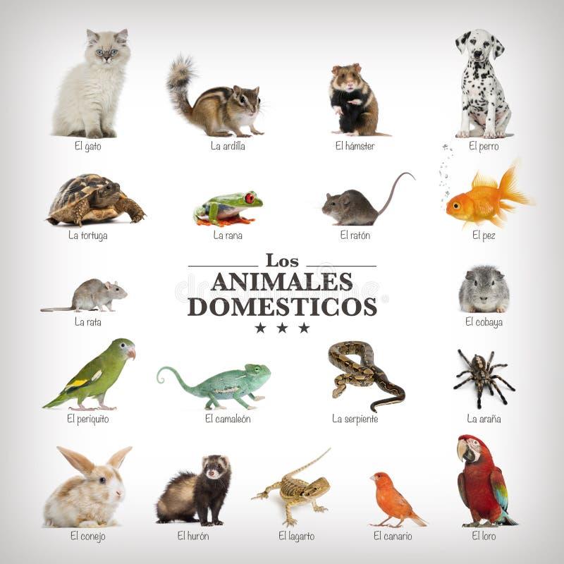 Affisch av husdjur i spanich arkivfoto