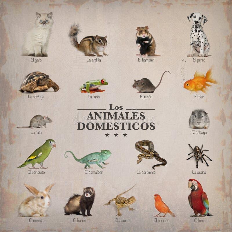 Affisch av husdjur i spanich arkivbilder
