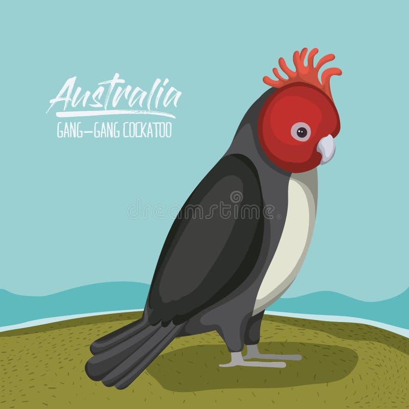 Affisch för Australien liga-liga kakadua i utomhus- plats på färgrik kontur royaltyfri illustrationer