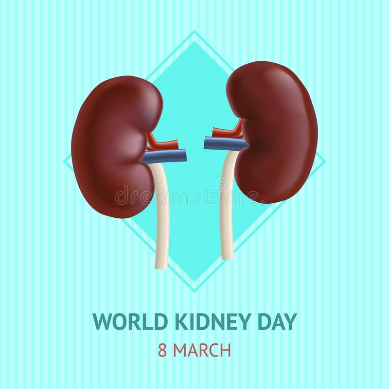 Affisch för kort för inre organ för realistisk detaljerad njure 3d mänsklig vektor royaltyfri illustrationer