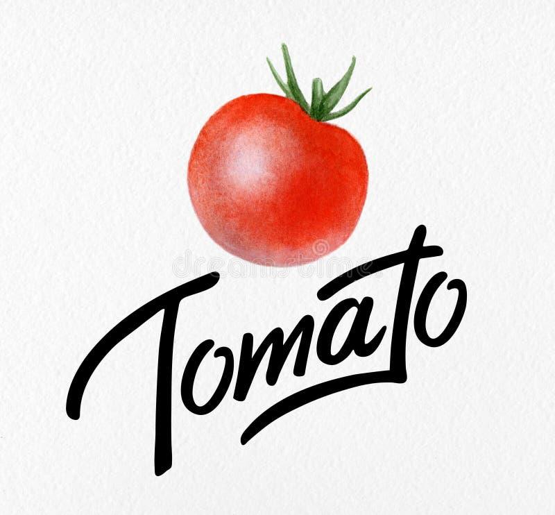Affisch med den röda vattenfärgteckningen och organisk tomat för bokstäver - naturliga grönsaker för vykortet, logo royaltyfri foto
