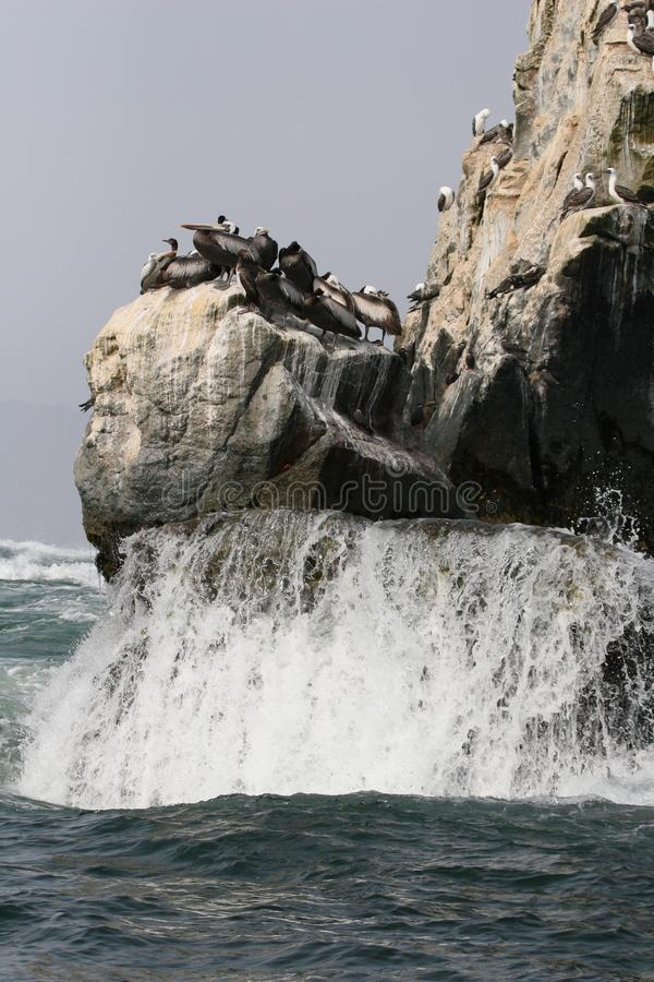 Affleurements rocheux avec les idiots et les oiseaux péruviens de pélicans au Pérou photo libre de droits