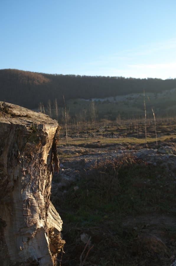 Afforestation stock photography