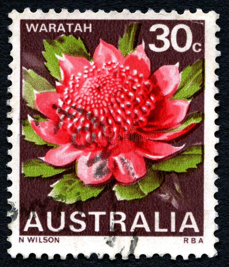 Affrancatura dell'australiano di Waratah immagine stock