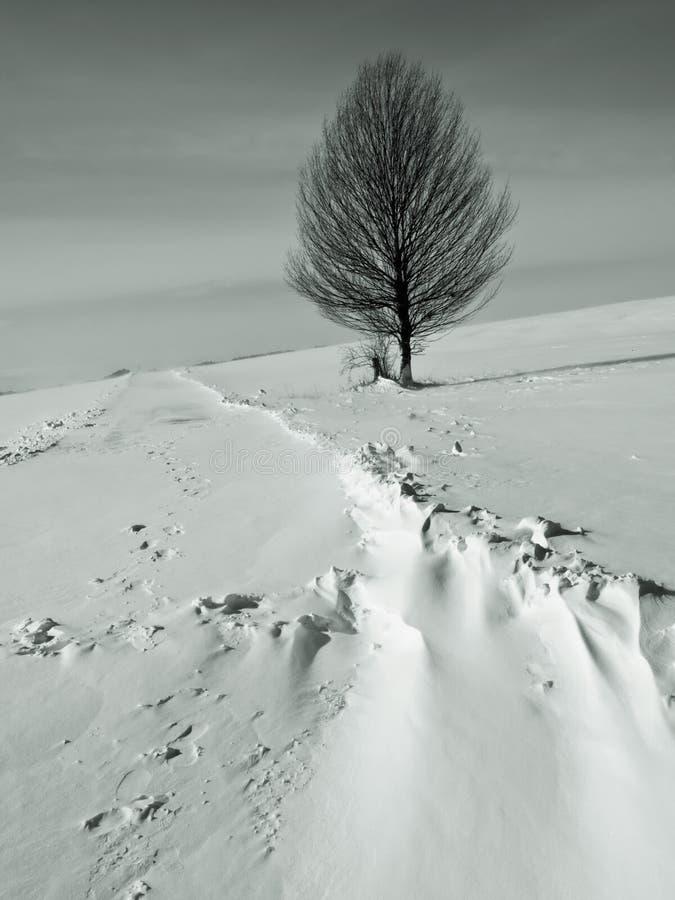 Afgedreven sneeuw over weg royalty-vrije stock foto's