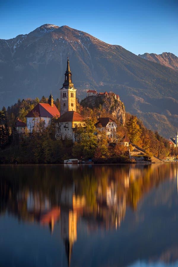 Afgetapt, Slovenië - het Meer tapte op een mooie de herfstochtend af met de beroemde Bedevaartkerk van de Veronderstelling van Ma stock afbeelding
