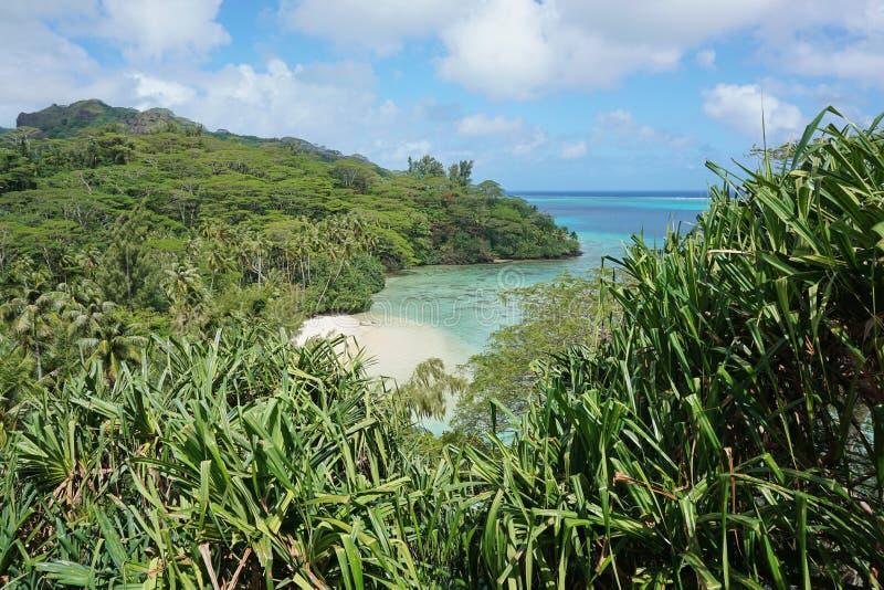 Afgezonderd zandig strand met weelderige tropische vegetatie stock foto
