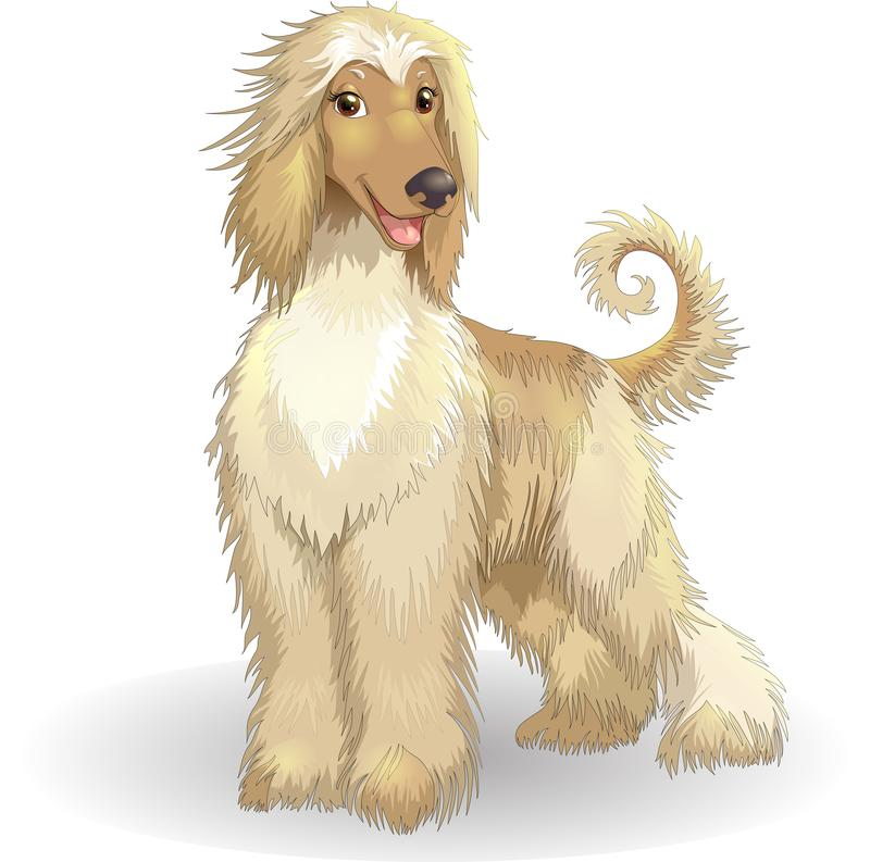 Afghan hound vector illustration cheerful purebred dog. Purebred dog afghan hound vector illustration cheerful smiling greyhound borzoi dog stock illustration