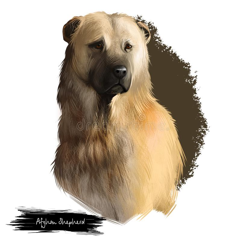 Afghan Shepherd breed digital art illustration isolated on white. Cute domestic purebred animal. Kuchi or Afghan. Afghan Shepherd breed digital art illustration royalty free illustration