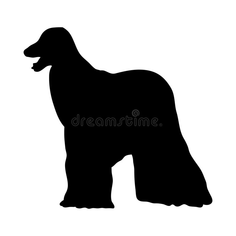 Afghanisches Jagdhund-Schattenbild stock abbildung