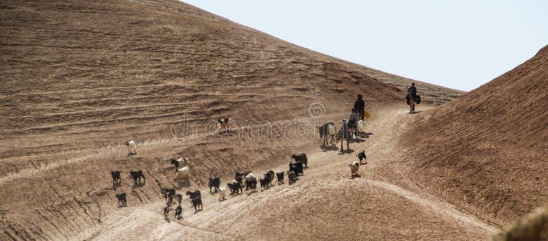 Afghanistan-Flüchtlingslageresel und -schafe im Norden in der mittleren kämpfenden Jahreszeit stockfotografie
