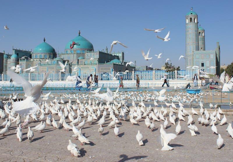 aficionado Μουσουλμανικό τέμενος σε Mazari Σαρίφ στοκ φωτογραφία