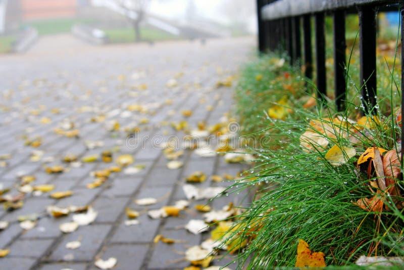 afield grändgräshus royaltyfri foto
