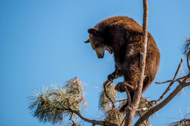 Afraid of Heights royalty free stock photo