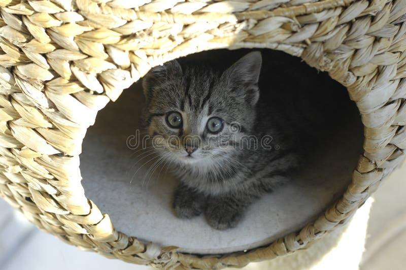 Afraid Kitten stock image
