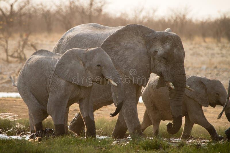 africa arkivfoton