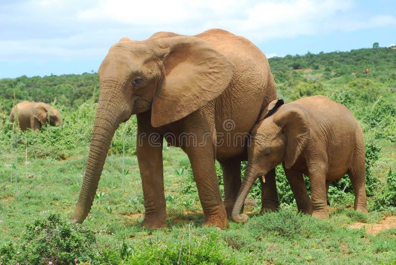 africa royaltyfria bilder