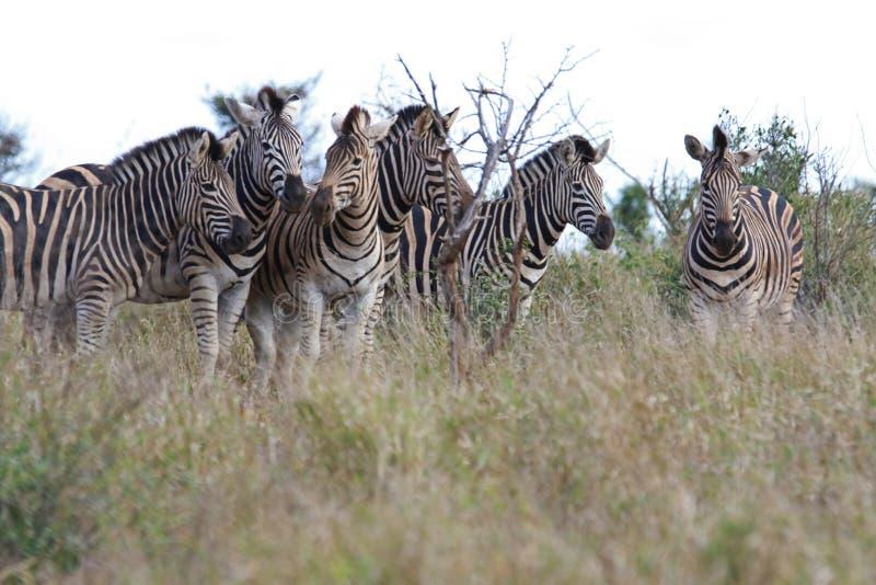 Africa, Animal, Photography royalty free stock photo