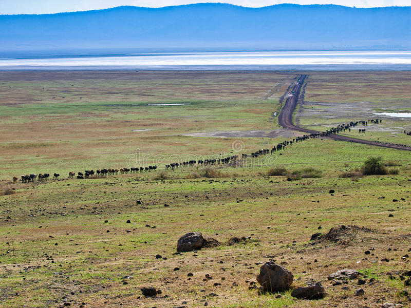 Download Africa Cattle Drive stock image. Image of african, landscape - 23066931