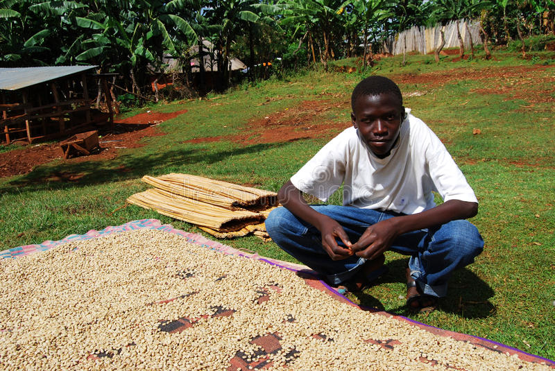 Africa Coffee. The children of coffee growers help dry coffee with their family after school royalty free stock photos