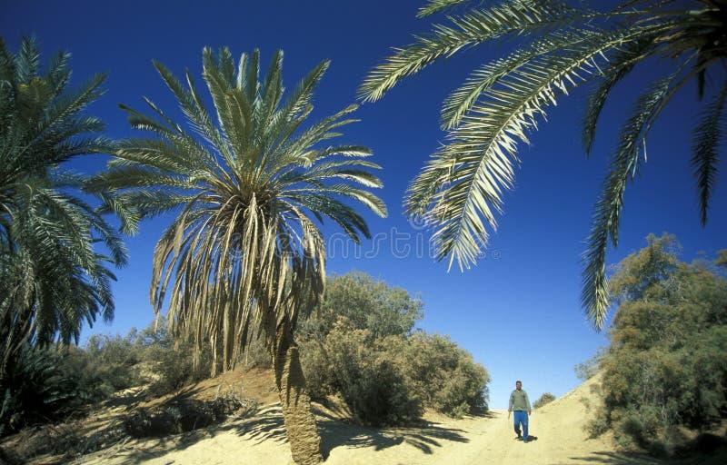 AFRICA EGYPT SAHARA SIWA OASIS royalty free stock photos