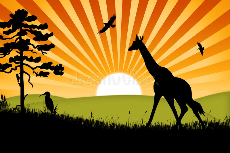 Africa giraffe background royalty free stock photography
