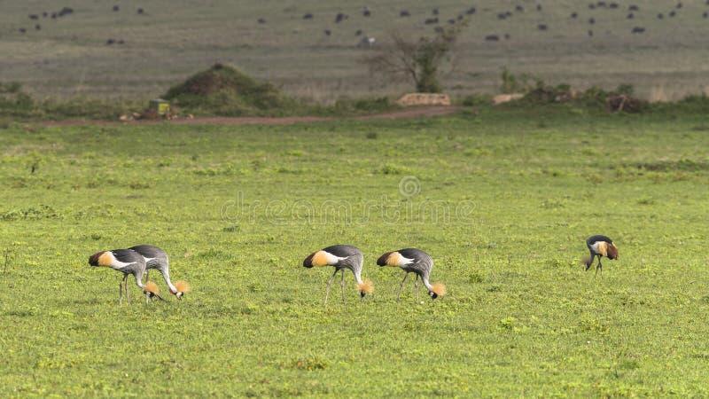 africa krateru ngorongoro Tanzania obrazy stock
