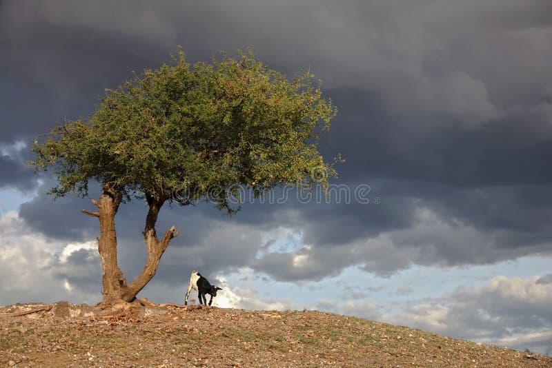 Africa Landscape 030 Serengeti Royalty Free Stock Images
