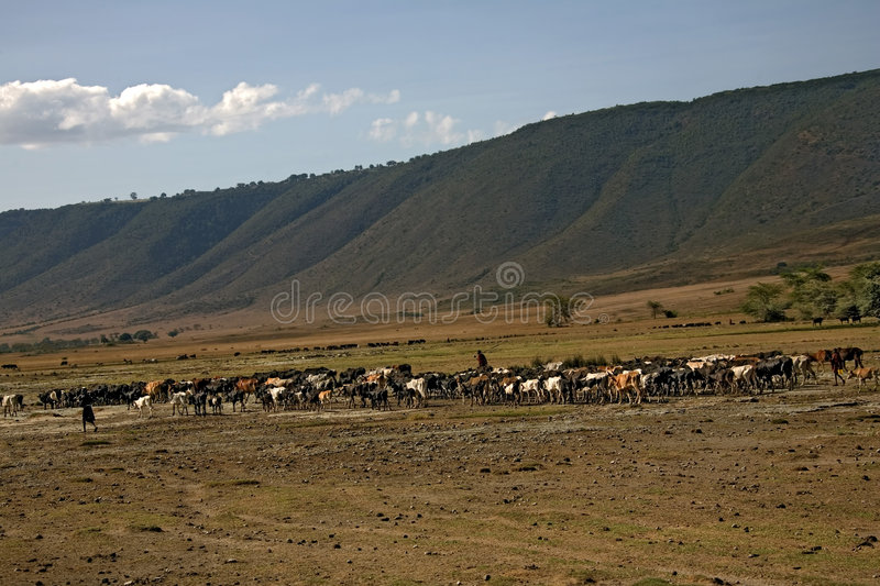 Download Africa Landscape, Ngorongoro Stock Image - Image: 553115