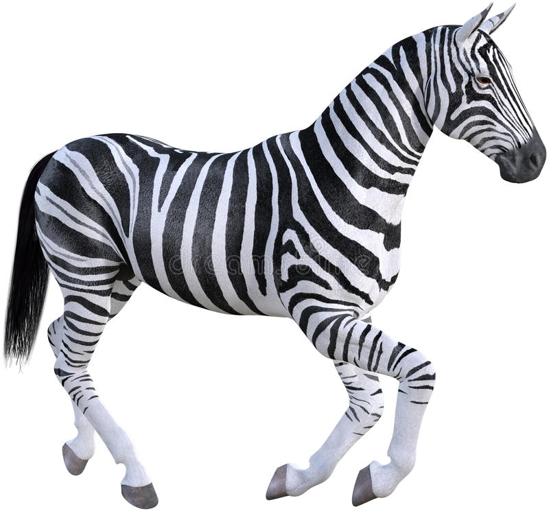 Africa Nature Zebra, Wildlife, Isolated. Wildlife nature illustration of a zebra from Africa. The African wildlife animal is isolated on white. PNG file stock image