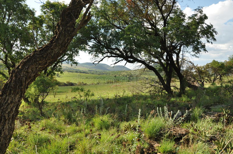 africa podróż obrazy royalty free