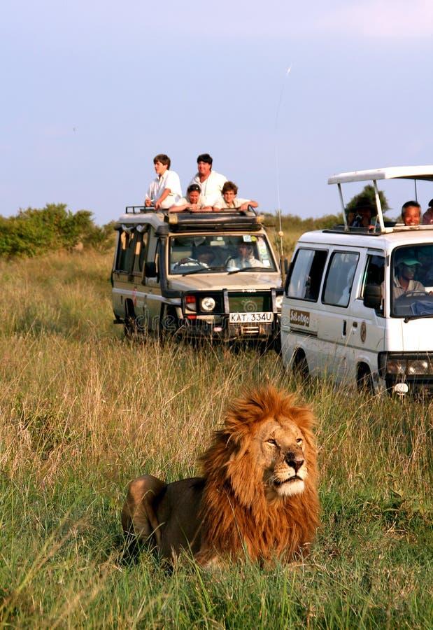africa safari arkivfoto