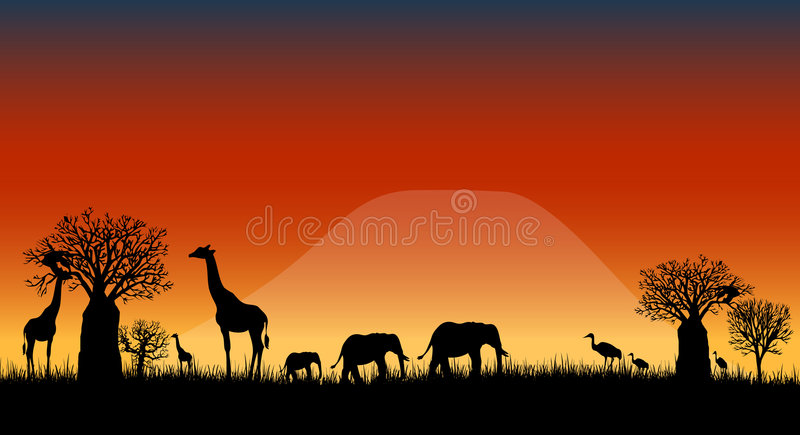 Africa savanna landscape vector. Vectored illustration as silhouette of african skyline of savanna at sunset with kilimanjaro mountain on background and