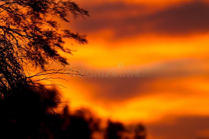 Download Africa sunset stock image. Image of golden, backlit, acacia - 15710879
