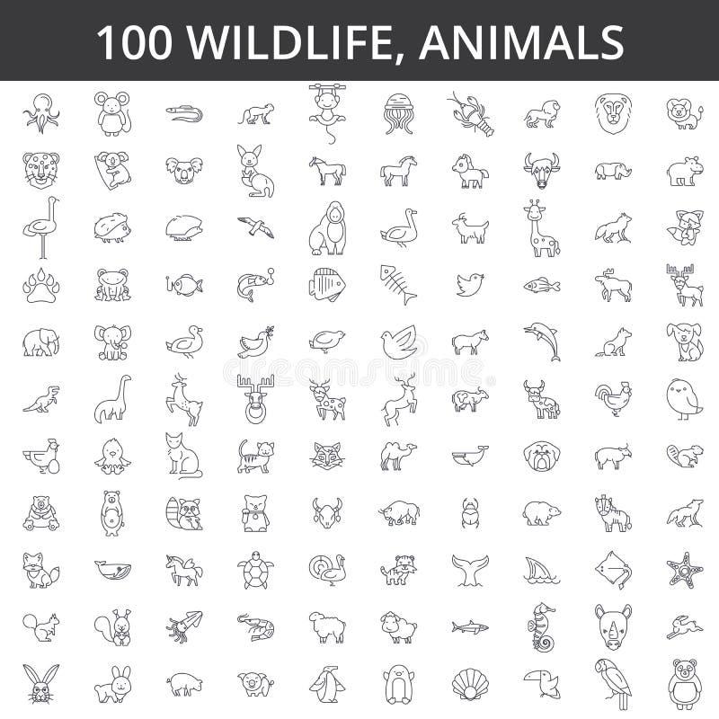 Africain de faune, mer, domestique, forêt, animaux de zoo, chat, chien, loup, renard, tigre, poisson, ours, cheval, Dino, rhinocé illustration libre de droits
