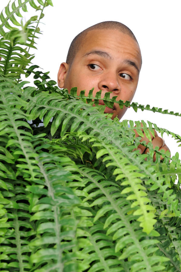African American Male. Peeping from behind fern (focus on man stock photos