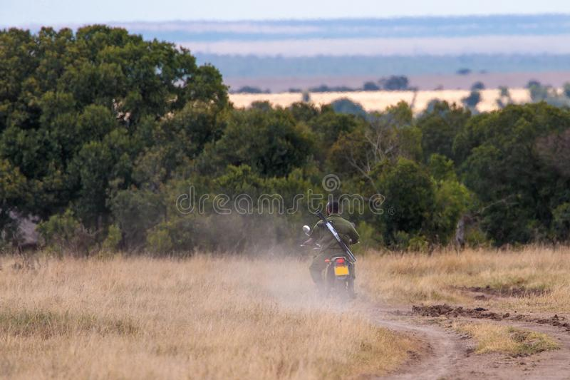 African-American ranger riding a patrol motorcycle near a tree forest in Kenya stock image