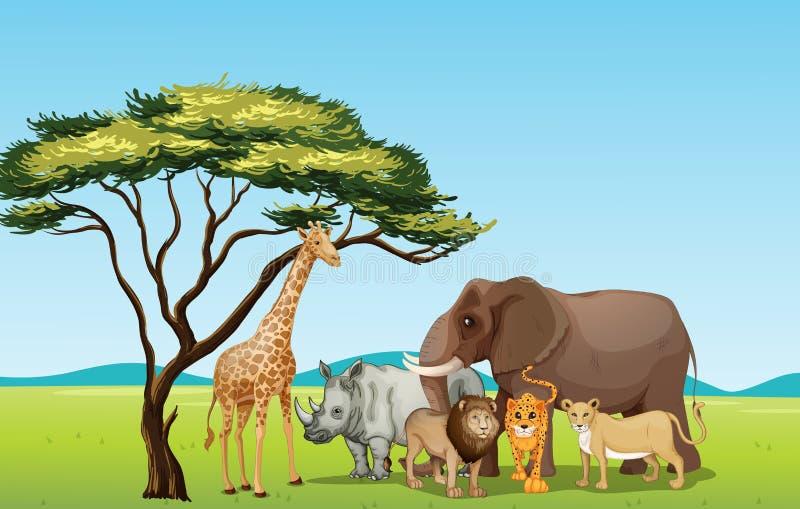 African animals stock illustration