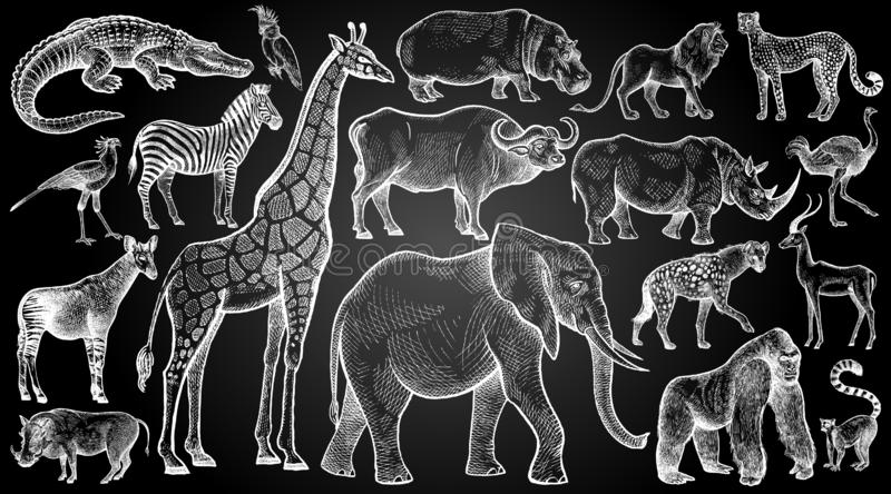 African animals and birds set. Hand drawing sketch white chalk on blackboard. Vector illustration art. Vintage engraving style. Nature objects wild life stock illustration