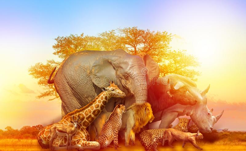 African animals collage sunset stock image