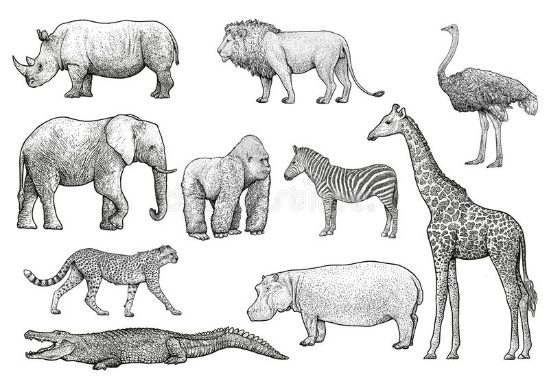 African animals illustration, drawing, engraving, ink, line art, vector vector illustration
