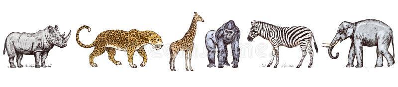 African animals. Rhinoceros Elephant Giraffe Hippopotamus Leopard Hyena Western gorilla Wild zebra. Engraved hand drawn stock illustration