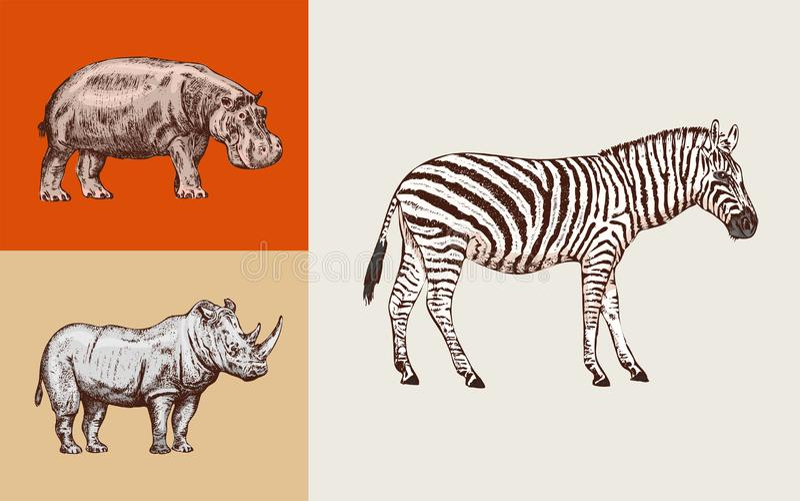 African animals. Rhinoceros Hippopotamus Wild zebra. Engraved hand drawn Vintage old monochrome safari sketch. Vector vector illustration