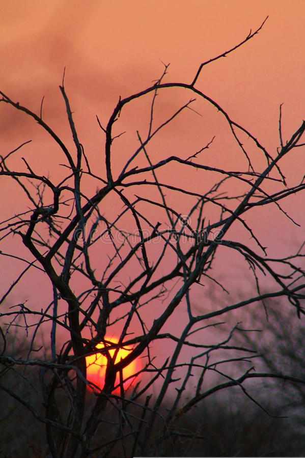 Download African Bush Sunset - Red Gold Warmth Stock Photo - Image: 26192716