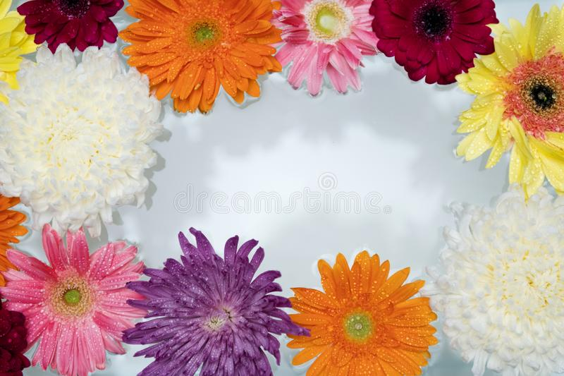 African, Daisy, Attractive stock images