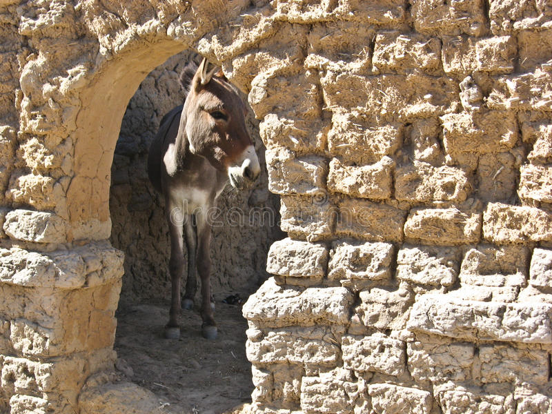 Download African Donkey In The Stable. Stock Image - Image: 21450877